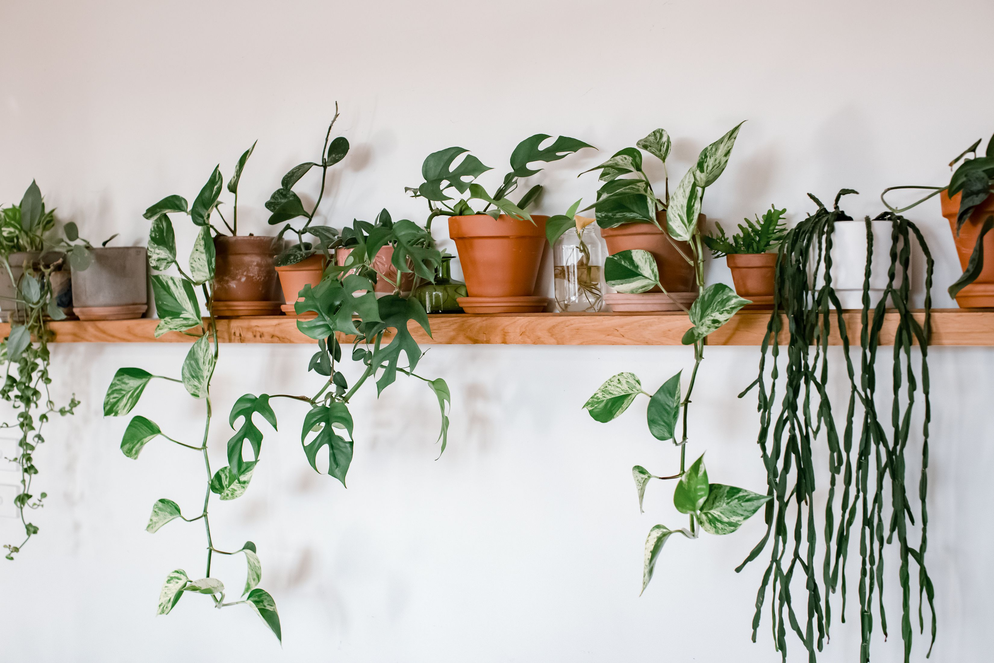 5 Houseplants Perfect for the First-Time Plant Parent